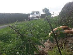 20140928_103507_Normanby Rd