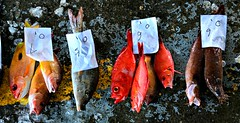 Seafood Road Kill (Mark Tindale) Tags: ribbet fishingport fishing taiwan taiwanese eastcoast national scenic fish sustainability overfishing seafood port chenggong market auction chinese carpark shark population pacific ocean sea boat 成功鎮 成功 taitung