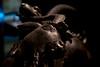 DSCF0621.jpg (Darren and Brad) Tags: chimeradiarezzo bronze italia chimaeraofarezzo nationalarchaeologicalmuseum firenze palazzodellacrocetta museoarcheologiconazionale italy bronzo florence