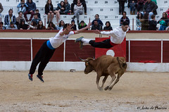 "Carnival ""bullfight"" (JOAO DE BARROS) Tags: bullfight recortadores action joão barros"
