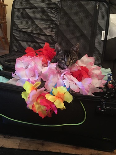 Tropical Puss