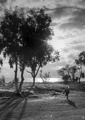 Feeling free! (tzevang.com) Tags: bw bythesea gipsy kid piraeus greece tree monochrome clouds sun canon5d