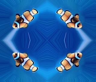 #CrazyCamera fish