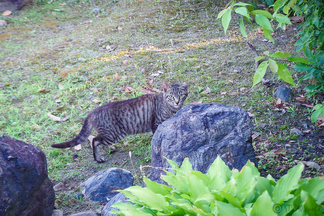 Today's Cat@2014-06-17