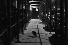 (tsering.phurpu) Tags: life street blackandwhite newyork lines dark lost photography hope lights living moments fear documentary queens again nights differences visual solitary ways deceptive wanderer obsessed recurring wonderer surrealismvsrealism wishfulthoughts