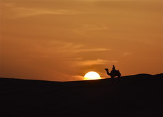 Desert Finale (The Spirit of the World) Tags: sunset sun sunlight nature sand desert dramatic camel silkroad rider sanddunes rajasthan endoftheday thardesert rememberthatmomentlevel4 rememberthatmomentlevel1 rememberthatmomentlevel2 rememberthatmomentlevel3 camelriderinthethardesert