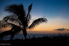 225:365 (Megan Fralich) Tags: ocean sunset beach silhouette maui palmtree 254