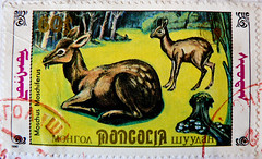 great stamp Mongolia   60M (Siberian musk deer, Moschus moschiferus, , Porte-musc de Sibrie, , Sibirisches Moschustier, Moschidae) sello francobolli poste timbre Mongolie       60M (thx for sending stamps :) stampolina) Tags: animal animals postes asien stamps deer mongolia porto musk tem postage revenue selo bolli sello mongolei sellos briefmarken pulu frimrken briefmarke  timbres frimrker siberianmuskdeer timbreposte francobolli bollo  pullar timbresposte moschusmoschiferus frimaerke moschus  wysyka moschidae  postapulu yupio postetimbre  templite    potarina patoilaidos  peiatky  potovn blyegek buchnh  portemuscdesibrie  sibirischesmoschustier