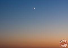 Grous1 (tirarumafoto) Tags: sunset lake portugal nature photography photo fotografia beja herdade grous albernoa