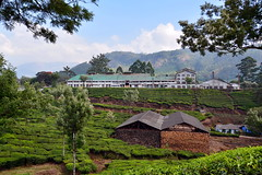 India - Kerala - Munnar - Tea Factory (asienman) Tags: india mountains kerala hills teafactory teaplantation munnar teapicker asienmanphotography teaplantagens