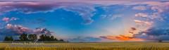 Prairie Sunset Panorama (Amazing Sky Photography) Tags: panorama twilight alberta settingsun wheatfield waxingmoon ptgui skycolors prairiesunset