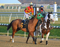 2012-11-30 (29) r9 Xavier Perez on #6 Nighcut (JLeeFleenor) Tags: photos photography laurelpark marylandracing marylandhorseracing md jockey   jinete  dokej jocheu  jquei okej kilparatsastaja rennreiter fantino    jokey ngi horses thoroughbreds equine equestrian cheval cavalo cavallo cavall caballo pferd paard perd hevonen hest hestur cal kon konj beygir capall ceffyl cuddy yarraman faras alogo soos kuda uma pfeerd koin    hst     ko  maryland