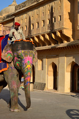 Colorful Serenity (Alonso Reyes) Tags: india elephant amber colorful fort indian palace elephants majestic indien jaipur rajasthan amer rajput  maharajas