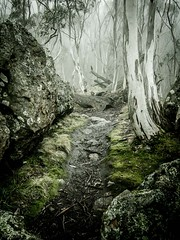 "snow gums in a sea of cloud • <a style=""font-size:0.8em;"" href=""http://www.flickr.com/photos/44919156@N00/14793671960/"" target=""_blank"">View on Flickr</a>"