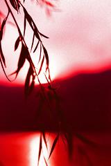 Lago di Garda Sunset (Jakub Slovacek) Tags: sunset summer italy lake alps reflection film water leaves analog lago xpro garda italia crossprocess crossprocessing alpi alpy veneto canoneos3 fujiastia100f itlie