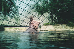 Berlin Zoo (It's my own invention) Tags: travel berlin europe utrecht budapest kiwirose kiwirosephoto