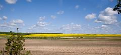 Poland's Countryside _3855 (hkoons) Tags: ranch yellow rural farm farming farmland soil dirt oil farms produce agriculture canola furrows rapeseed lublin furrow farmlands