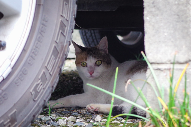 Today's Cat@2014-08-17