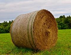 hayhey (aluminumprincess) Tags: summer brown green fall nature field ball big interesting hey harvest haystack roll hay