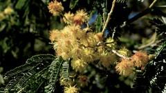 Fauna (Christine Amherd) Tags: creativity australia victoria vic australien ine passionate macedonranges blackhill kyneton mypassion ridgetrack christinescreativityphotography christinesphotography