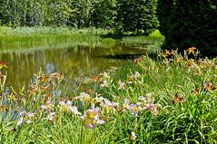 Jardins de Métis, Québec, Canadá (ipomar47) Tags: canada st river garden lawrence san pentax quebec jardin lorenzo metis redford k20d grandmetis