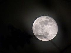Luna 9 de septiembre (Juancho 507) Tags: superluna panamá lunallena 2014 juancho507 fullmoon lunar supermoon minimalism round circle blackbackground depthoffield panasonic dmcfz70 lumix doncolchón fanáticosdelaluna
