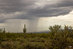 Desert Storm (Explore 9/18/2014) (doveoggi) Tags: arizona storm rain clouds desert explore scottsdale saguaro 7130 mcdowellsonoranpreserve