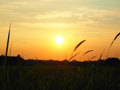 2014-09-12 17.39.42 (pang yu liu) Tags: travel sunset art festival dusk 09 sep  taoyuan   2014