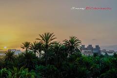 Entre palmeras. (jimmy chirivella) Tags: sun