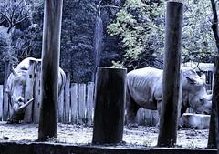 Image46 (Daniel.N.Jr) Tags: animal selvagem zoologico kodakz990