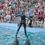 "Dolphinarium Nemo, Odessa • <a style=""font-size:0.8em;"" href=""http://www.flickr.com/photos/28211982@N07/15243991116/"" target=""_blank"">View on Flickr</a>"