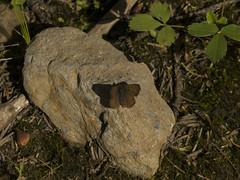P1070049 (Felipe..Alvarez) Tags: banffnationalpark rockiesmountainscanada