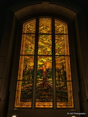 San Antonio Texas LDS TempleStained Glass Window by Tom Holdman 12 pieces of white fruit depicted in this tree of Life. (elnina999) Tags: building tower church water fountain statue angel night sanantonio religious temple gold nokia heaven texas christ tx hill religion jesus entrance belief stainedglass steeple christian believe sacred mormon 1020 lds brilliant eternal edifice lumia despain rekindle nokian8 texastemple