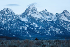 tetons bull (bigbuzzhunt) Tags: wyoming bull moose grand tetons hunting outdoor photography