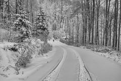 (Djordje Petrovic) Tags: goč mountain vrnjackabanja snow winter serbia srbija monochrom blackandwhite noir way nature forest tree tokina1224mm nikond80 nikon tokina