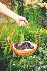 Kittens in a basket (BigLike Images) Tags: flowers sleeping summer woman baby cute green floral closeup cat kitten hand basket little small adorable kitty kittens lovely graden