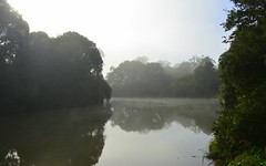 Wilson's River (dustaway) Tags: morning winter sky mist water fog reflections river landscape countryside foggy earlymorning australia nsw lismore waterscape treesinfog northernrivers treesandwater wilsonsriver morninglandscape wilsonsrivervalley