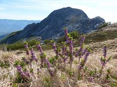 Pania Secca (Emanuele Lotti) Tags: park italy parco mountain alps montagne trekking italia hiking 10 tuscany toscana della alpi montagna maggio apuane croce monti 2014 pania apuan escursionismo secca escursioni
