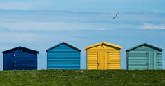 Little boxes...and gull! (reposting) (Pattycake-1 (Away until Autumn)) Tags: uk beach june wooden huts coastal northsea essex beachhuts dovercourt cliche harwich eastanglia eastcoast dovercourtbay efs55250mmf456is