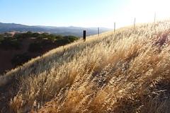 (Ty Ho) Tags: california park lighting sky sunlight foothills grass dead golden weeds shiny afternoon bright hiking hill hike hills hour daytime summertime openspace walnutcreek concord shining rolling castlerock mountdiablo limeridge