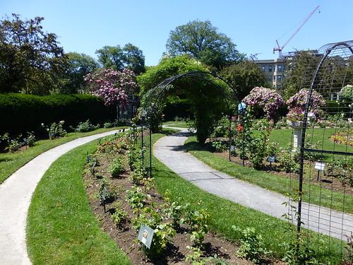 Kelleher Rose Garden, in the Fens