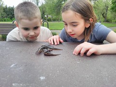Salamander Exploration (Amber *) Tags: nature oregon salamanders 2014
