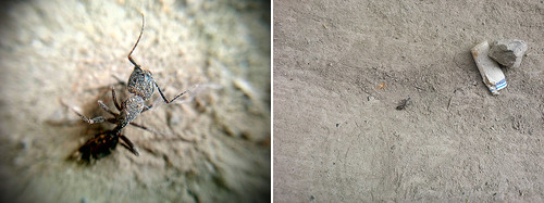 """Cellphone Macro Diptych • <a style=""""font-size:0.8em;"""" href=""""http://www.flickr.com/photos/76866446@N07/14617243806/"""" target=""""_blank"""">View on Flickr</a>"""