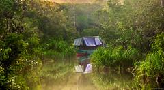 Tanjung Puting National Park (Achie Sabrun) Tags: trip morning trees river boat tour exploring ngc adventure jungle borneo orangutan campleakey klotok tntp tanjungputingnationalpark kelotok