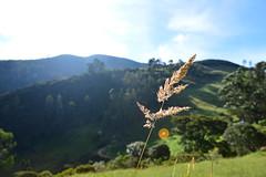 (Mafe Ramirez) Tags: sky cloud naturaleza mountain nature field arcoiris photography colombia cielo nubes campo fotografia colina tranquilidad airelibre serenidad maferamirez