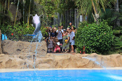 Fabulous Dolphin Show at Loro Parque (lens buddy) Tags: animals zoo tiger dolphins tenerife whales orca canaries canaryislands flipper puertodelacruz gorillas whitetigers loroparque dolphinshow loropark orcashow