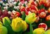 Tulips in Amsterdam (nagillum) Tags: flowers amsterdam tulips nagillum paintedflowers