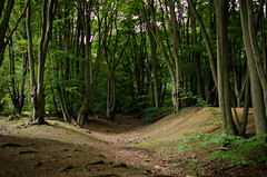 Ambresbury Banks (Daniel James Greenwood) Tags: london woodland eppingforest woods wildlife cityoflondon naturephotography earthwork ironagefort citycommons ambresburybanks