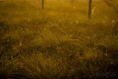 DSC_7681 (andrey.salikov) Tags: summer colour beautiful wonderful photo nice scenery gorgeous free august sensual latvia stunning lovely  2014 lettonia espectacular niceday niceplace niceimage fantasticcolors   nikond60 peacefulmind  moodshot dreamscene goodatmosphere fantasticplaces 500mmf18  colourfulplaces   andreysalikov relaxart