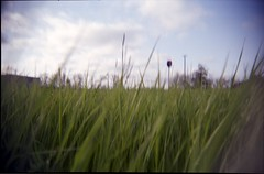 long grass (Beaulawrence) Tags: camera sky color colour green film field grass point lomo lomography long shoot fuji superia meadow plastic negative le 400 asa vignetting cheap vivitar c41 clik